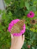 Borboleta do papel de parede da cor da flor imagens de stock royalty free