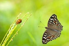 borboleta e erro Fotos de Stock