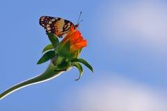 Borboleta e flor imagem de stock royalty free