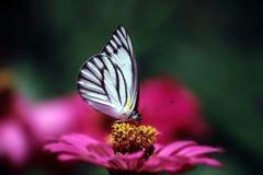 Borboleta e flor Fotos de Stock Royalty Free