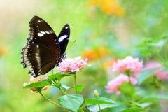 Borboleta e flor Foto de Stock Royalty Free
