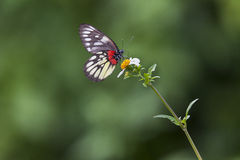 Borboleta e flor branca fotografia de stock royalty free