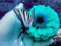 Borboleta e flor fotografia de stock