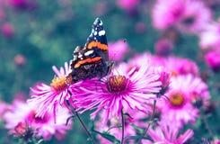 Borboleta e flor violeta Imagens de Stock Royalty Free
