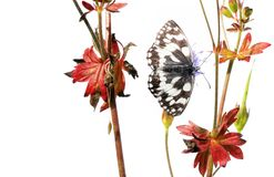 Borboleta e flora imagens de stock royalty free