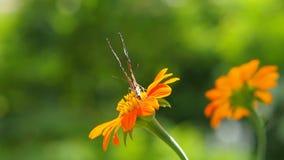 Borboleta e flores alaranjadas