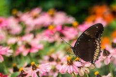 Borboleta e flores bonitas Fotos de Stock Royalty Free