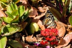 Borboleta e flores comuns Imagens de Stock Royalty Free
