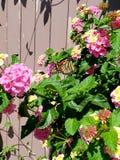 Borboleta e flores foto de stock royalty free