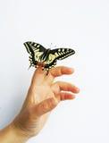 Borboleta e mão Foto de Stock Royalty Free