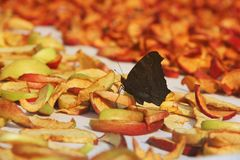 Borboleta e maçãs secadas Fundo da secagem Maçãs secadas ‹cortadas do †do ‹do †foto de stock royalty free