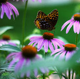 Borboleta em flores fotos de stock royalty free