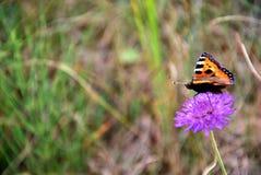 Borboleta em um anel da flor Fotografia de Stock Royalty Free