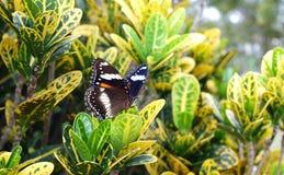 Borboleta em um jardim tropical Foto de Stock Royalty Free