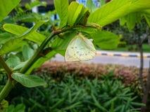 Borboleta em uma árvore Imagem de Stock Royalty Free