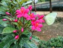 Borboleta em uma flor Fotografia de Stock Royalty Free