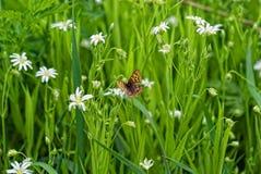 Borboleta em uma flor Foto de Stock Royalty Free