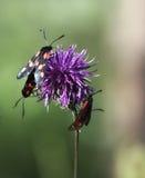 Borboleta em uma flor Imagens de Stock