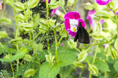 Borboleta em uma flor campo com flores carmesins grama coberto de vegetação Foto de Stock Royalty Free