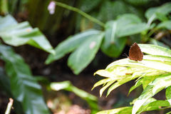 Borboleta em uma flor e nas folhas Fotos de Stock Royalty Free