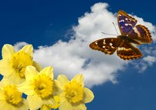 Borboleta empoleirada em uma flor   Imagens de Stock Royalty Free