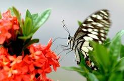 Borboleta empoleirada em uma flor Fotos de Stock Royalty Free