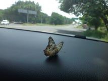 Borboleta empoleirada no traço de meu carro foto de stock royalty free