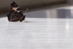 A borboleta está em uma flor Imagens de Stock Royalty Free
