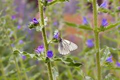 A borboleta está em uma flor Imagens de Stock