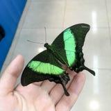 A borboleta exótica senta-se na mão Fotografia de Stock Royalty Free