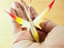 Borboleta feito a mão à disposição para a decoração, feito das folhas secadas da palma de nipa com arte colorida Fotografia de Stock Royalty Free