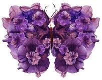 A borboleta floral feita secou a flor pressionada as pétalas do petúnia do lírio Fotos de Stock