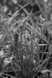Borboleta futura de Swallowtail foto de stock