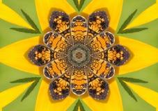 Borboleta Kaleidoscopic do crescente da pérola Fotos de Stock