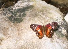 Borboleta multi-colorida vivo na rocha multi-colorida fotos de stock royalty free