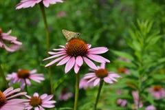 Borboleta na flor fotos de stock