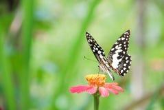 Borboleta na flor imagem de stock royalty free