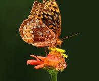 Borboleta na flor Fotos de Stock Royalty Free