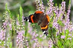 Borboleta na flor Fotografia de Stock Royalty Free