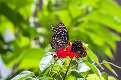 Borboleta na flor vermelha imagens de stock