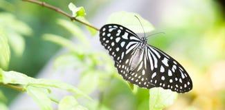 Borboleta na folha do verde da flor - conceito da ecologia Imagem de Stock