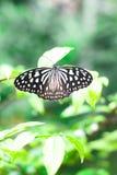 Borboleta na folha do verde da flor - conceito da ecologia Foto de Stock Royalty Free