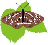 A borboleta nas folhas Foto de Stock Royalty Free