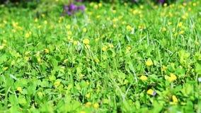 Borboleta no campo de flor amarelo video estoque