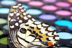 A borboleta no profissional compo sombras de olho imagens de stock