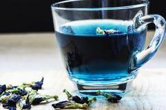 Borboleta Pea Flower Tea fotos de stock royalty free