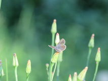 Borboleta pequena em uma planta Fotos de Stock Royalty Free