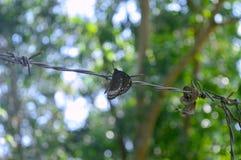Borboleta preta que descansa em um fio contra um fundo borrado das árvores imagens de stock
