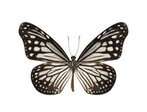 Borboleta preto e branco isolada no fundo branco Imagens de Stock