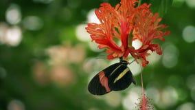 Borboleta que bebe Nectar From Exotic Flower filme